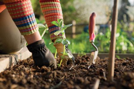 196058642-background-gardening