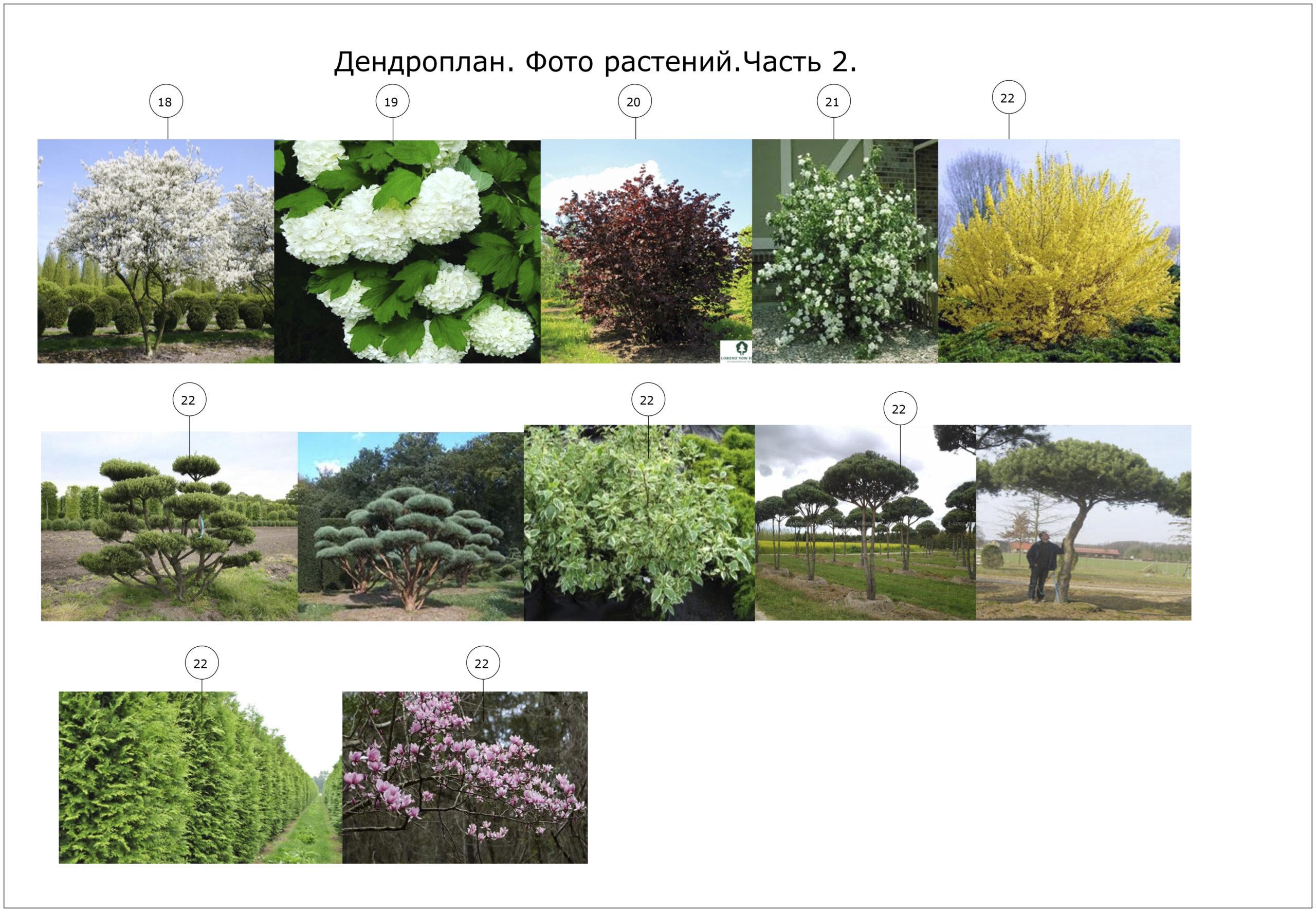 растения лес2